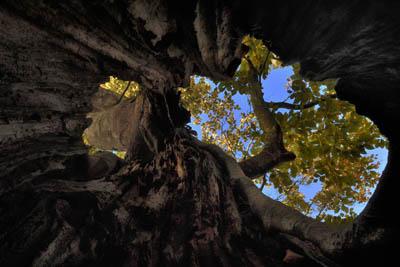 arbres_PhilippeL_cc
