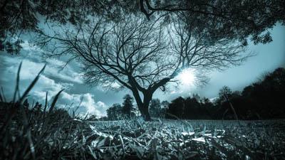 arbres_patryk_cc