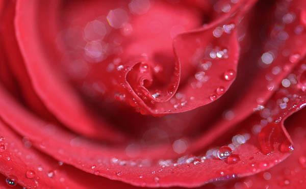 Fleurs_FDE_2r