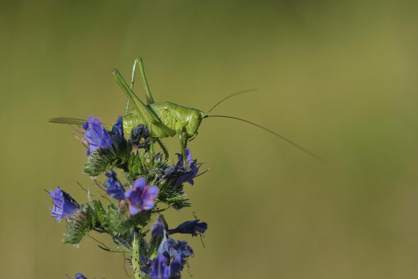 3_insecte