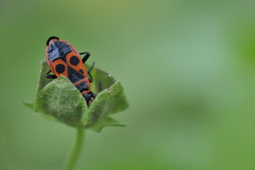 4_insecte