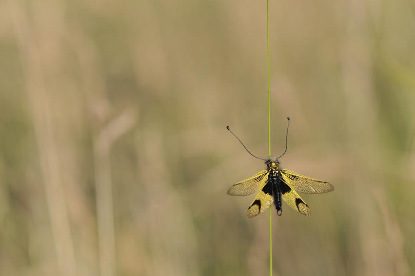 5_insecte
