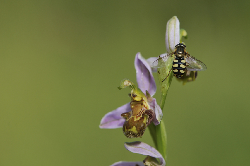 6_insecte