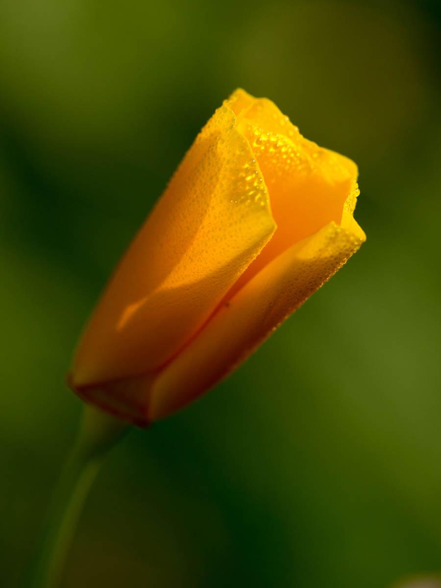 Fleurs_IDR_1