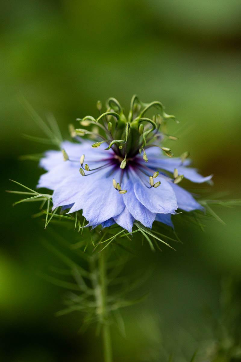 Fleurs_IDR_2