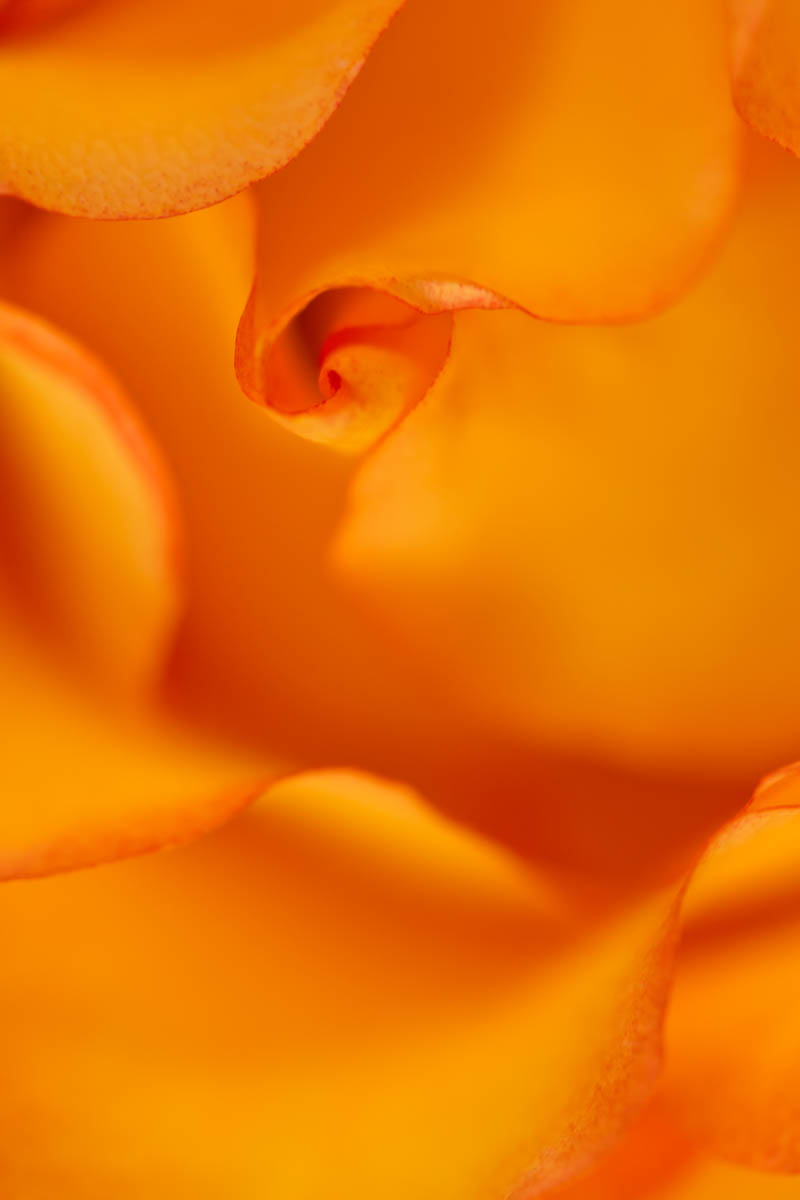 Fleurs_PDE_5