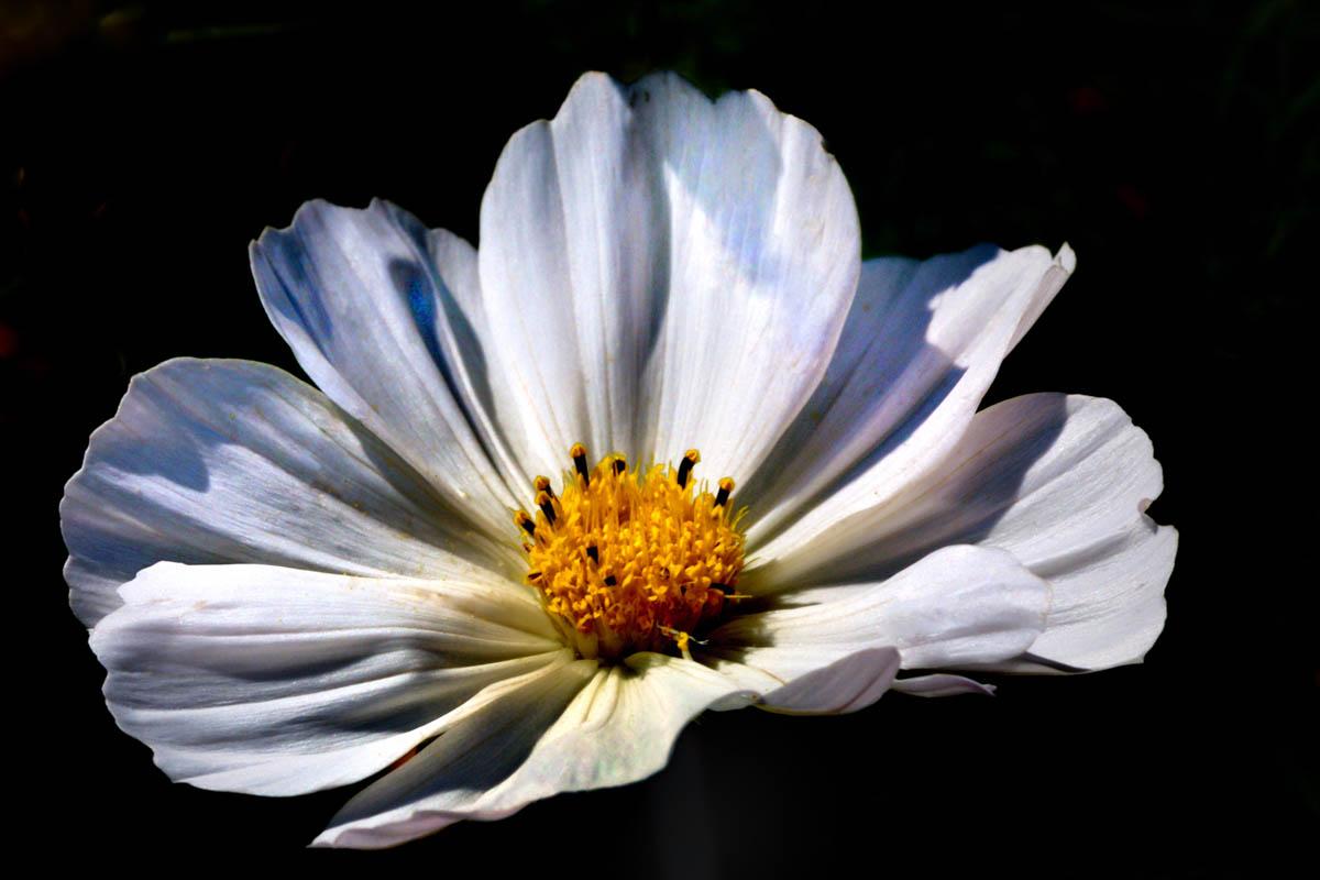 Fleurs_YSE_3