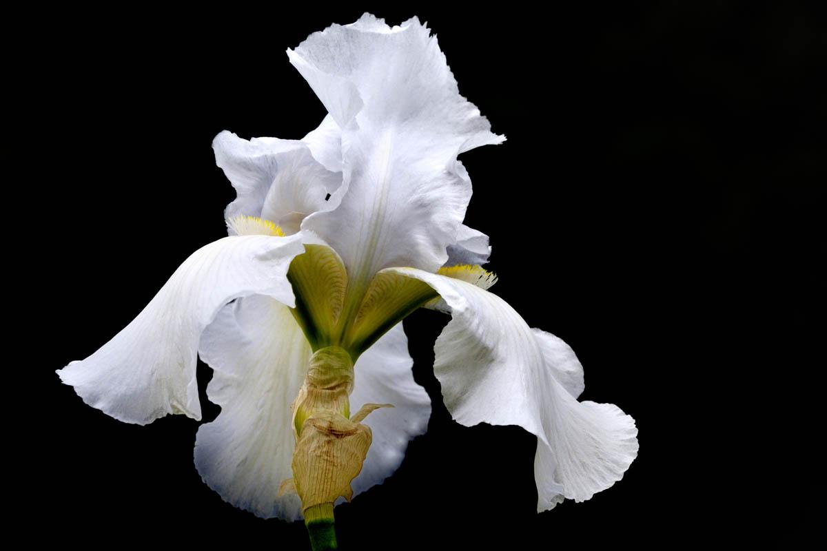 Fleurs_YSE_5