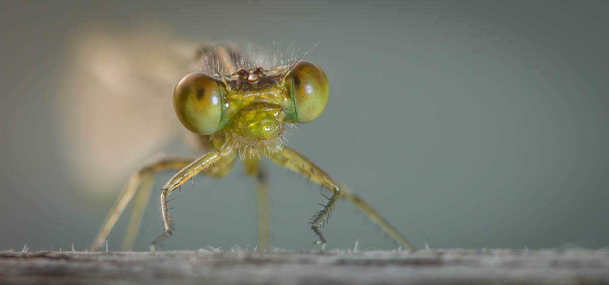 Insecte-macro_2_CC_PRI