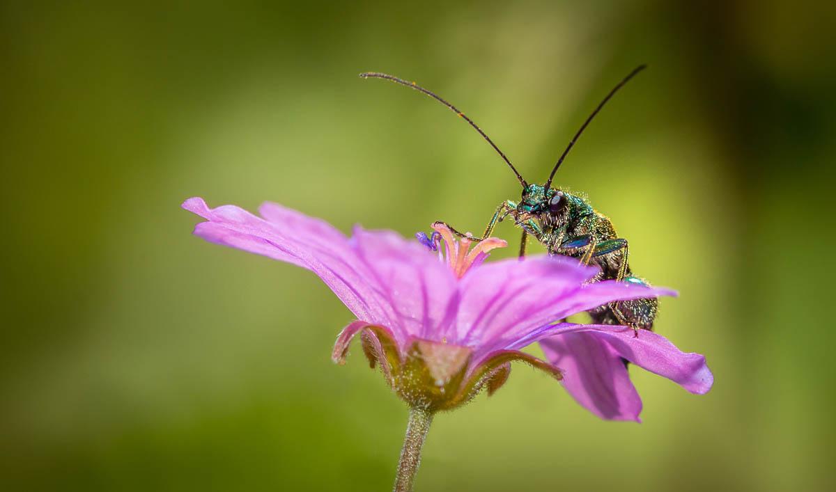 Insecte-macro_3