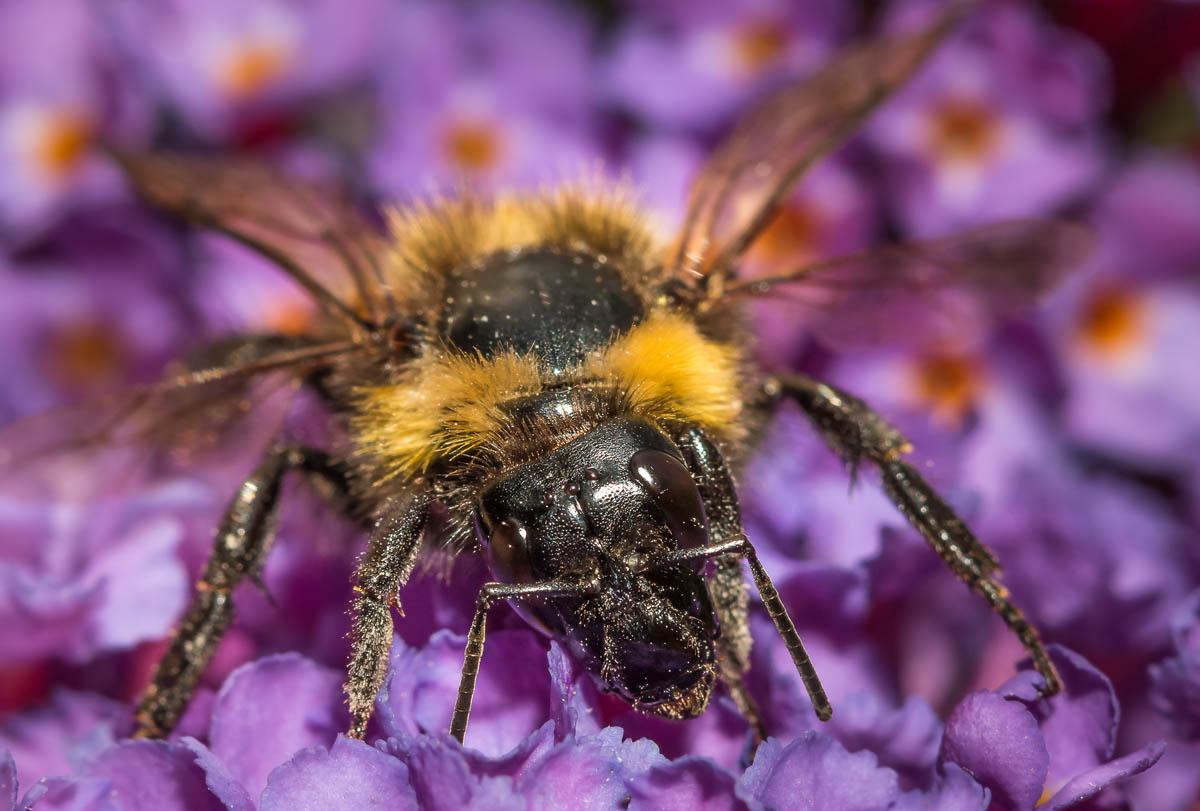 Insecte-macro_4