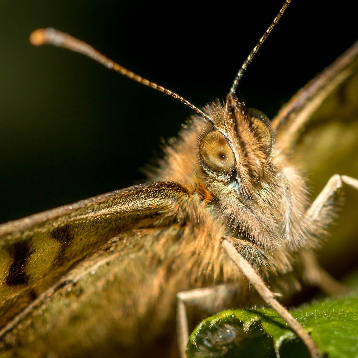 Insecte-macro_5
