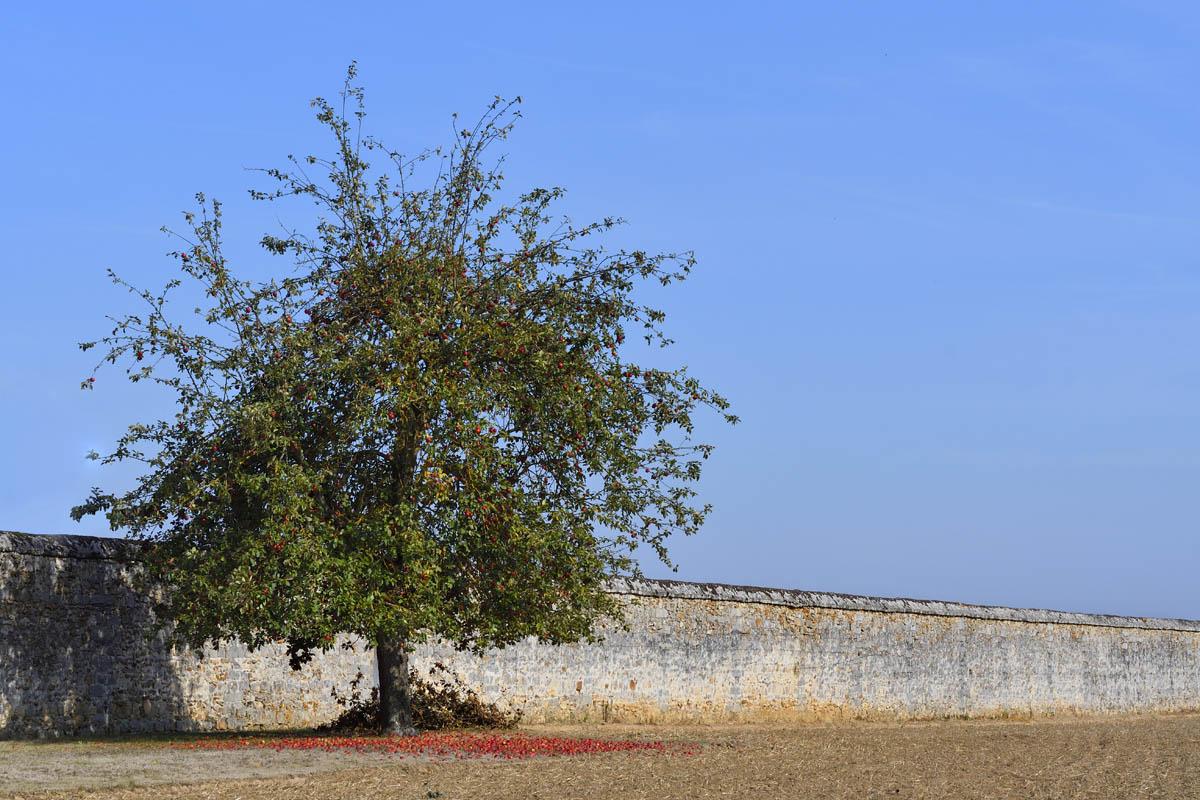 arbres_PhilippeL_1