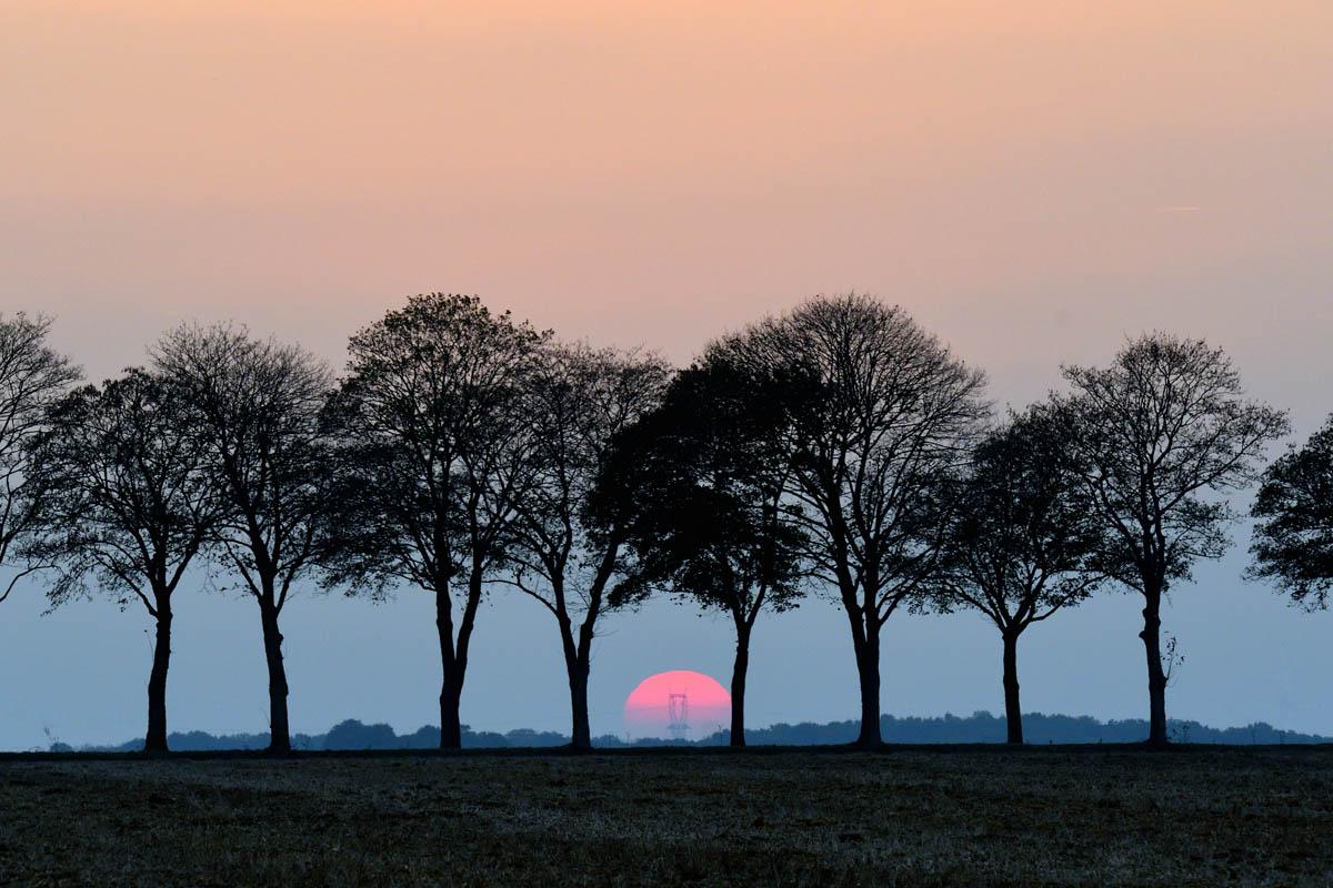 arbres_PhilippeL_2
