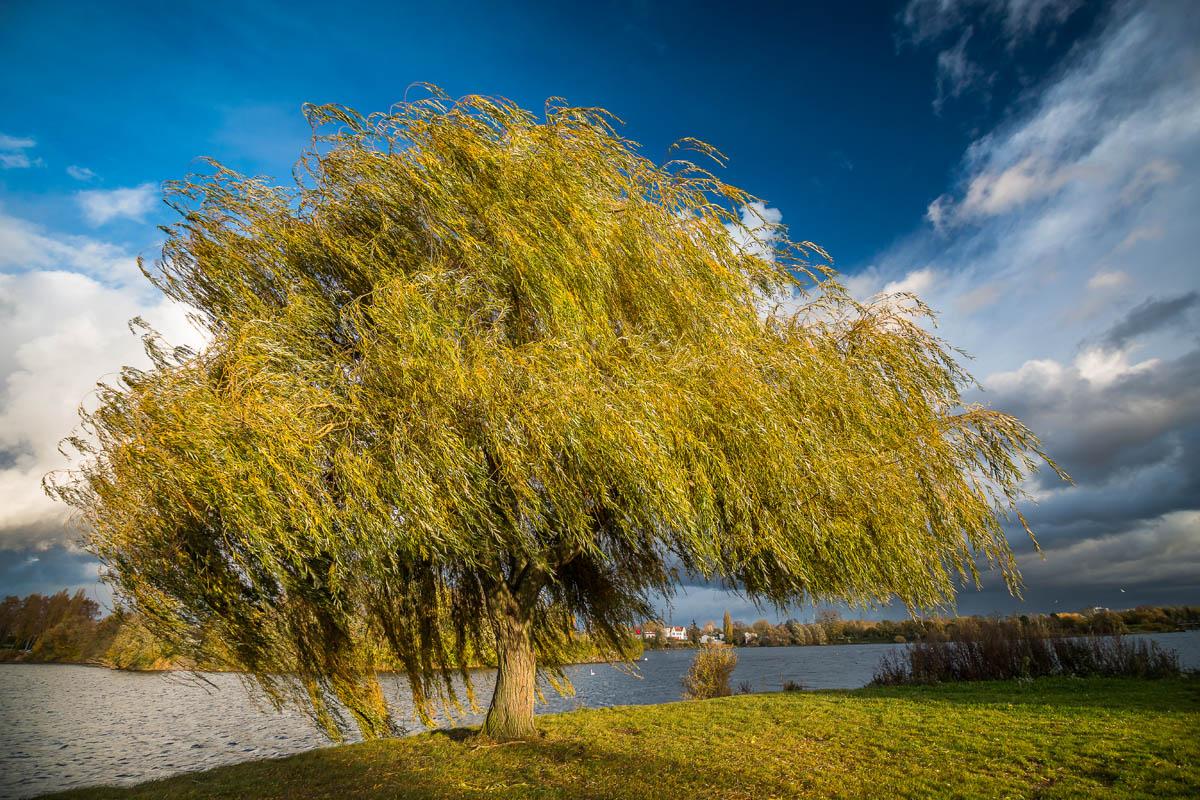 arbres_patryk_4