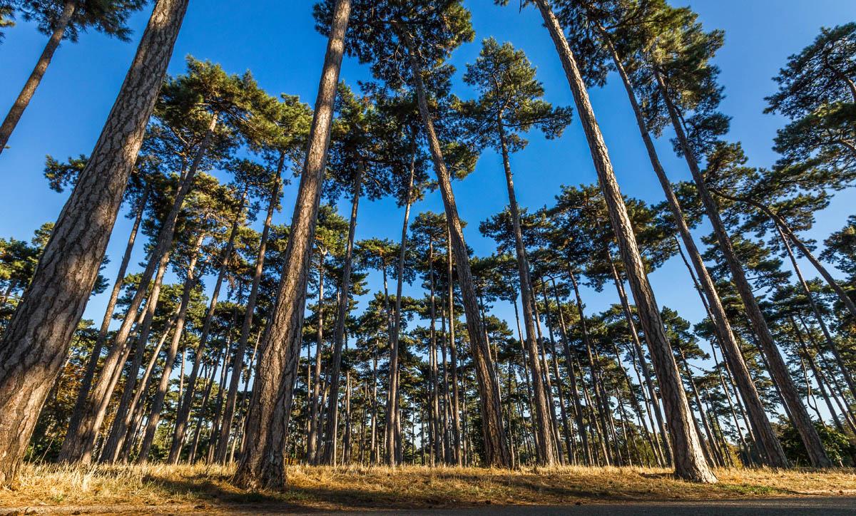 arbres_patryk_5