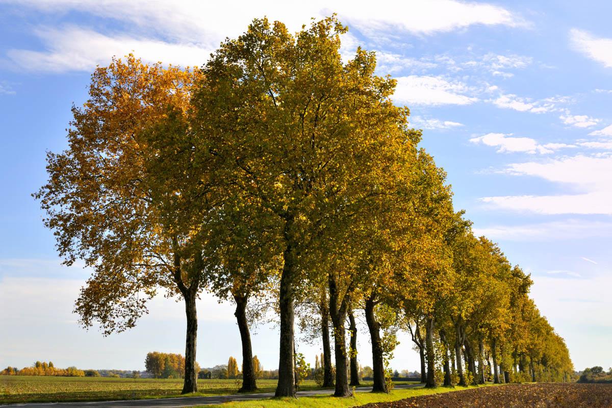 arbres_yves_3