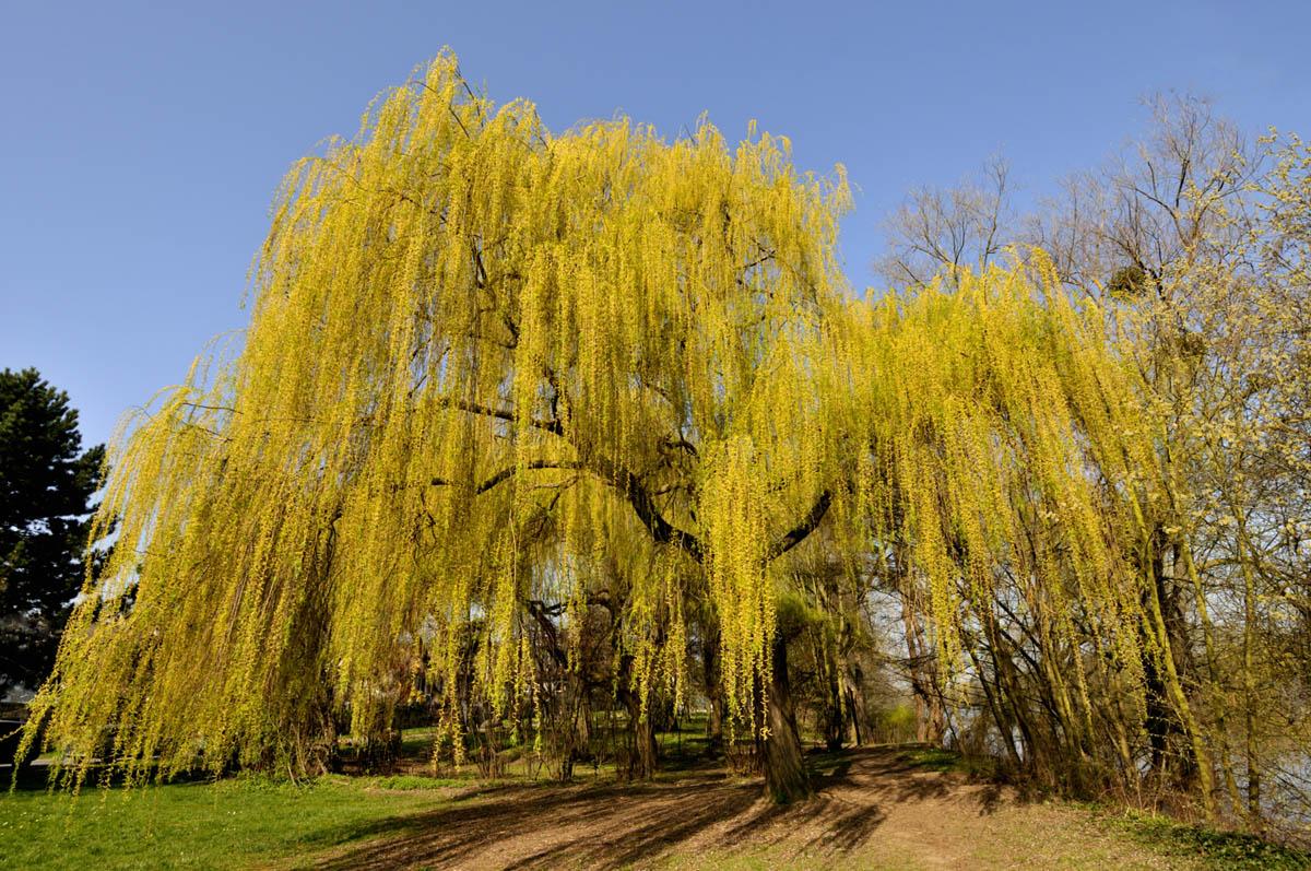 arbres_yves_4
