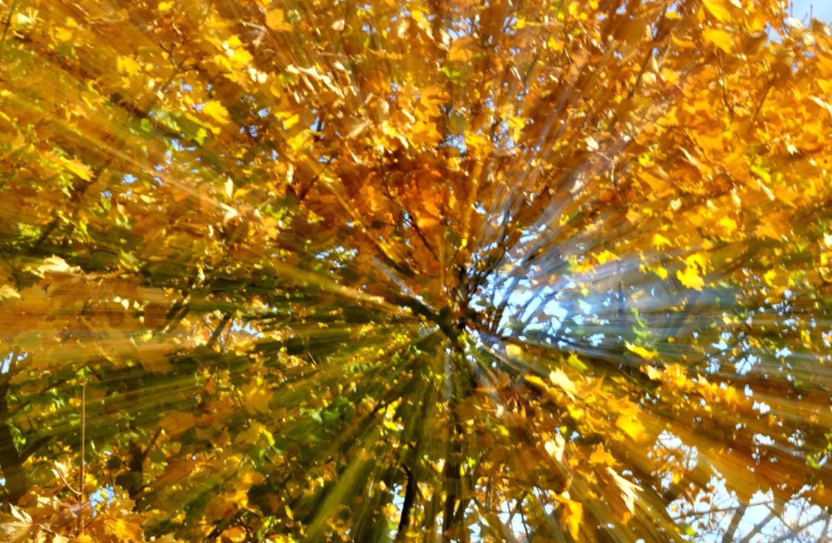 arbres_yves_5