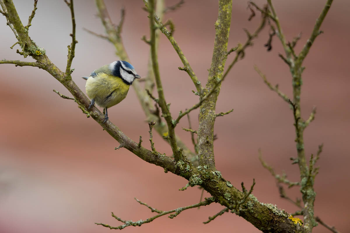 oiseau_1r