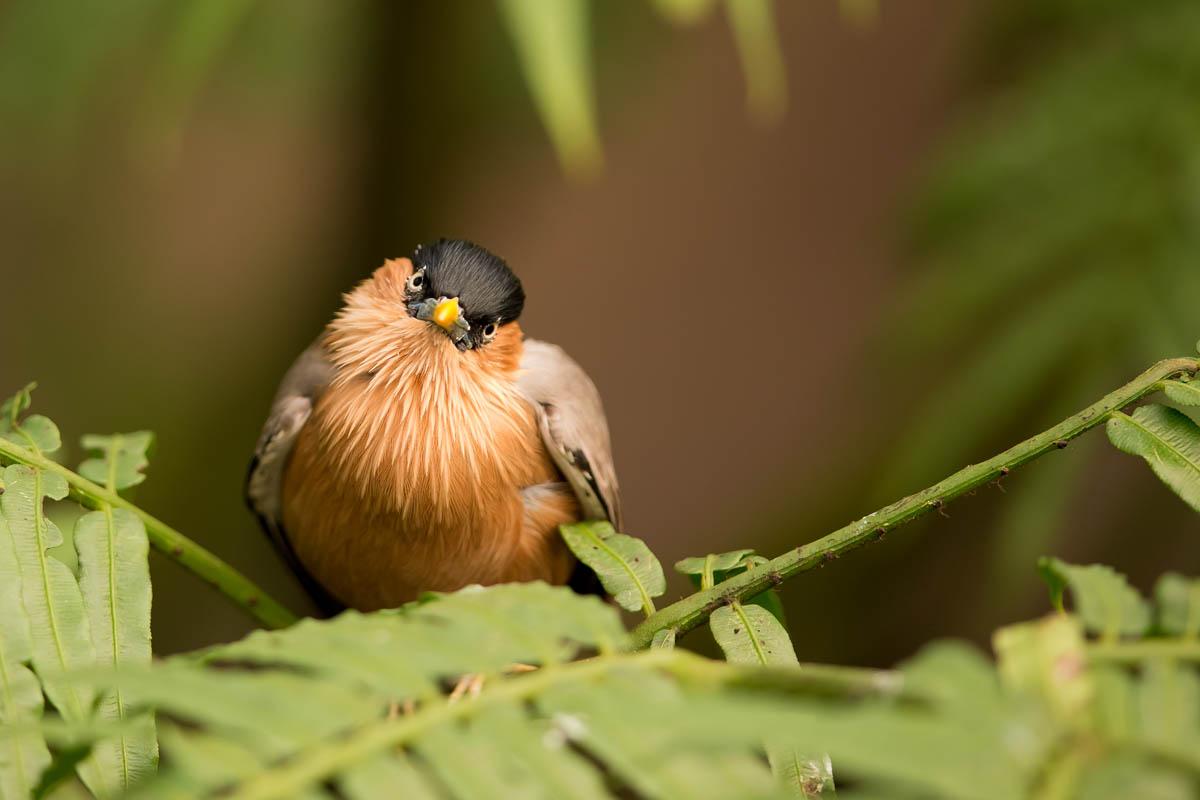 oiseau_4r