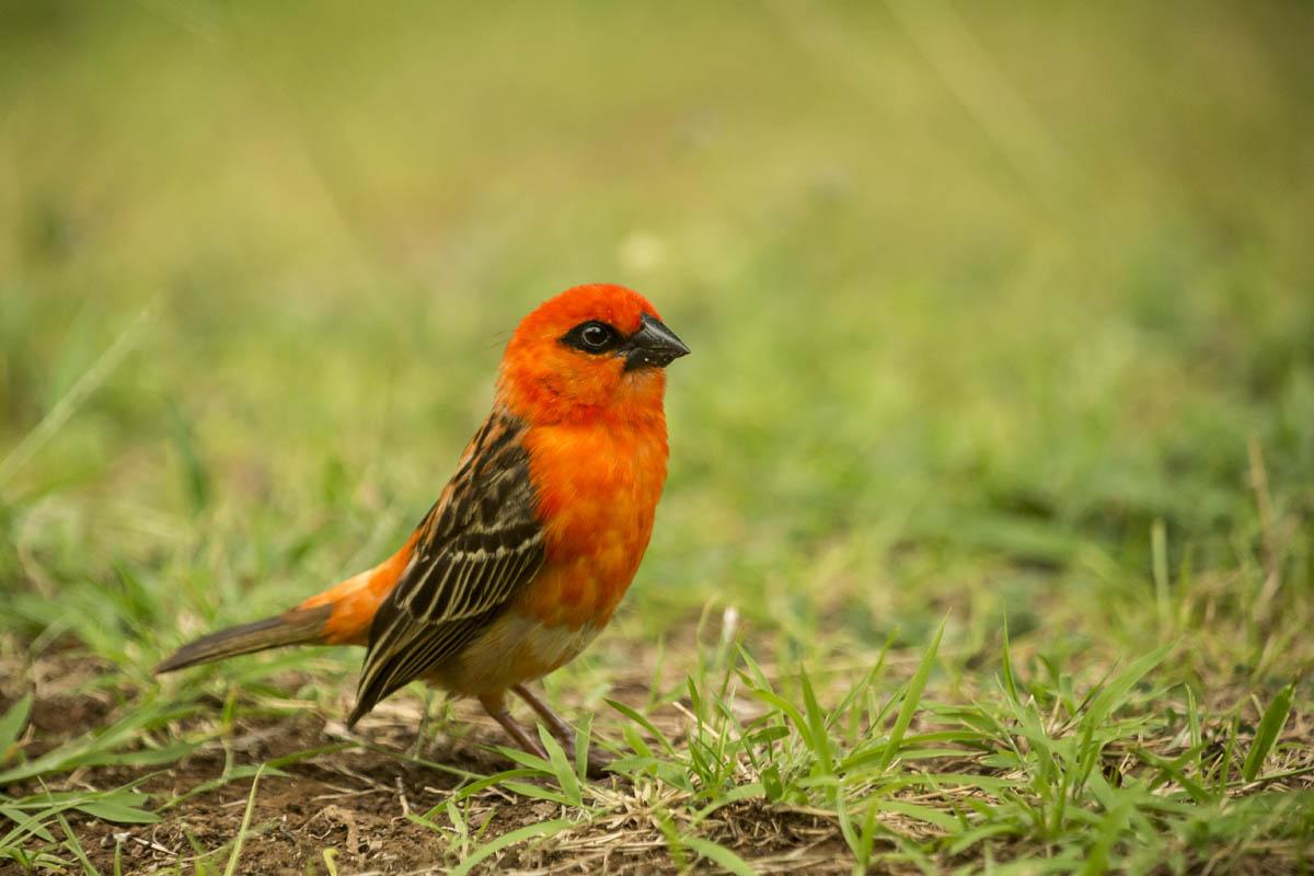 oiseau_5r