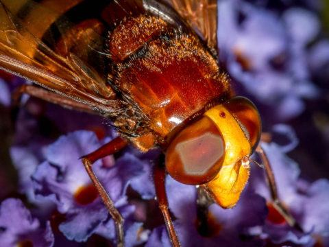 Insecte-macro_1