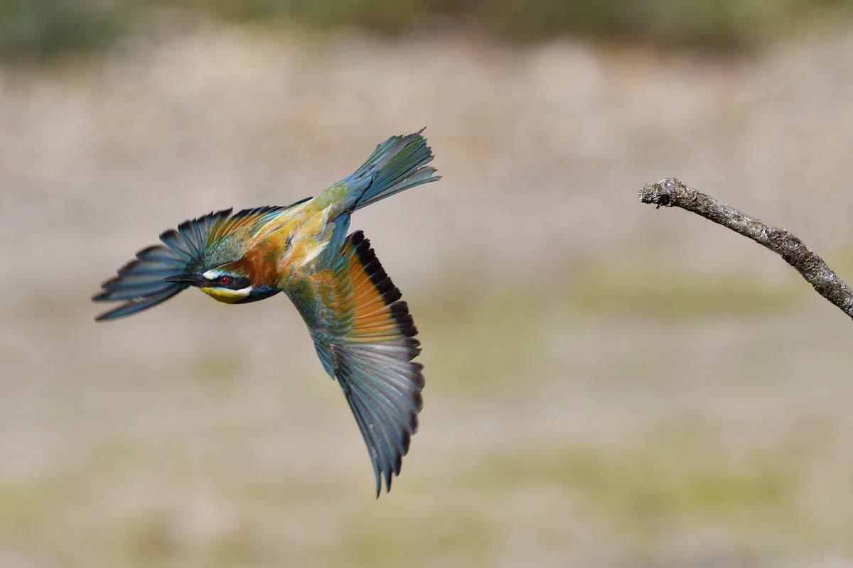 Oiseaux_2020_PLE_4