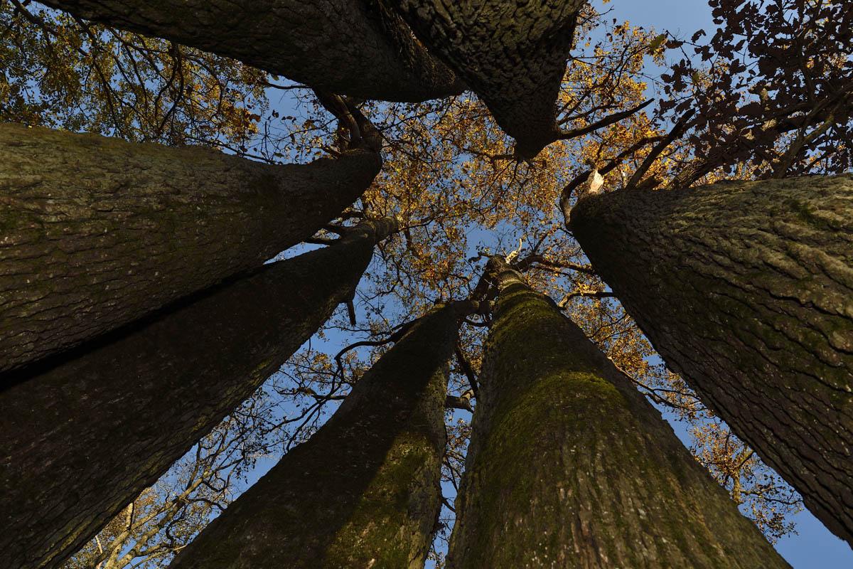 arbres_PhilippeL_3