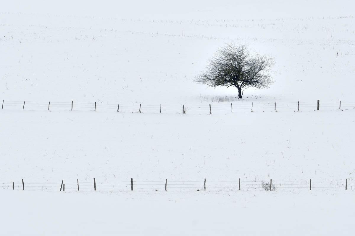 arbres_PhilippeL_4