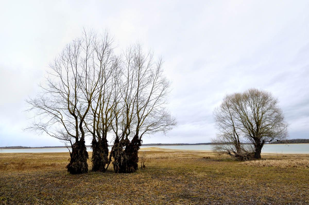 arbres_yves_1