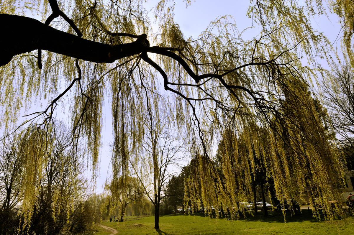 arbres_yves_2